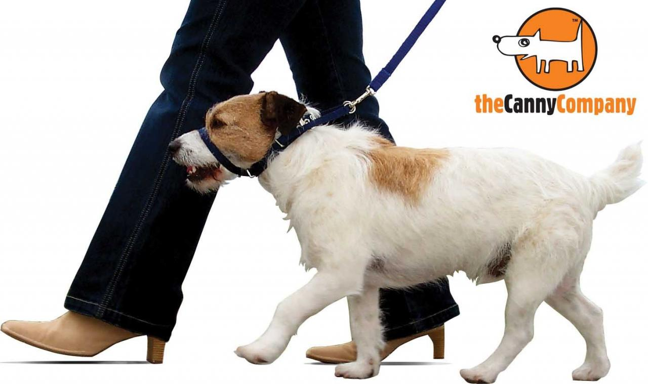 dog_walking_on_canny_collar21_1