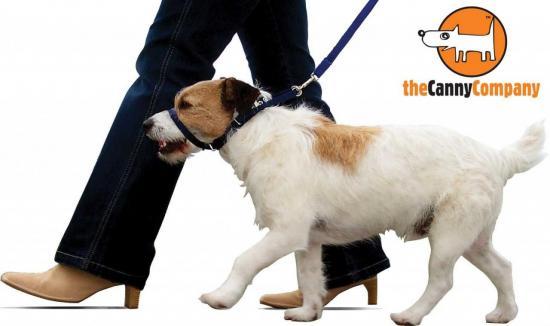 dog_walking_on_canny_collar21_1